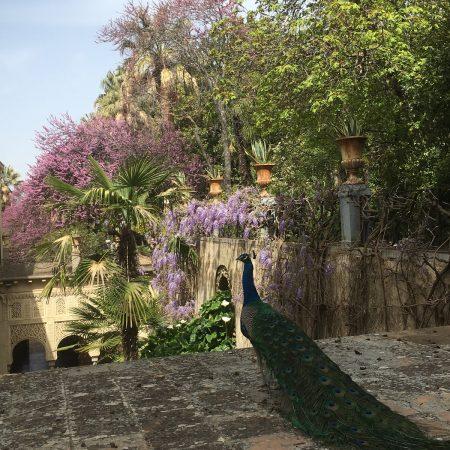 Jardin de los martyres (Granada)